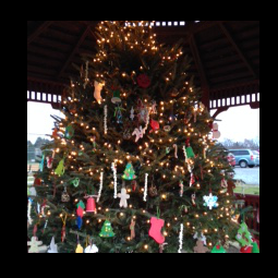 East Brandywine PA Official Website Official Website - Christmas Tree In Downingtown Pa